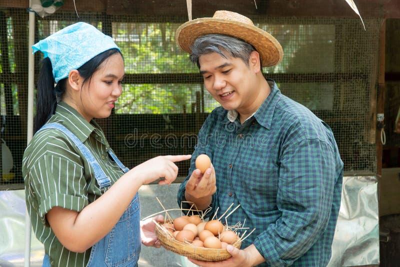 Os pares estão trabalhando na exploração agrícola do ovo da galinha E estão escolhendo ovos frescos olhar feliz e saudável imagens de stock royalty free