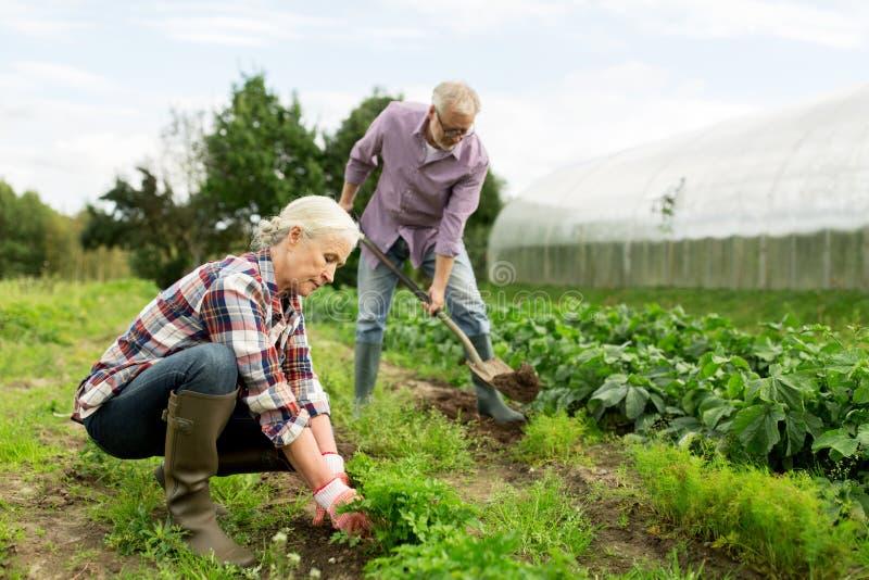 Os pares superiores que trabalham no jardim ou no verão cultivam imagens de stock