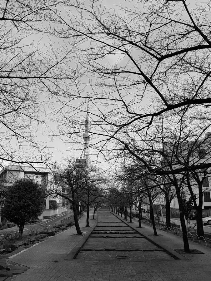 Os parques no outono lá são uma árvore sem folhas E pode ver a construção da árvore do céu do Tóquio em japão preto e branco foto de stock royalty free
