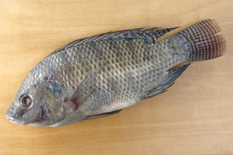 Os peixes chamaram Tilapia imagens de stock royalty free