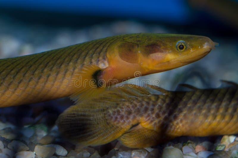 Os peixes da corda fecham-se acima fotografia de stock