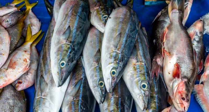 Os peixes de água salgada frescos venderam no mercado tradicional em Indonésia foto de stock