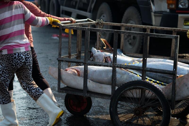 Os peixes de atum trocam no porto dos peixes de Qui Nhon, Vietname imagem de stock