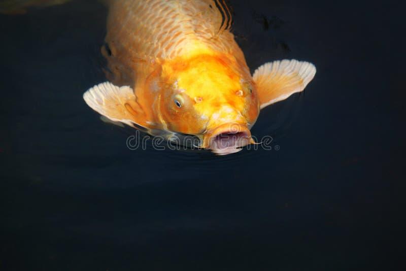 Os peixes de fala fotos de stock