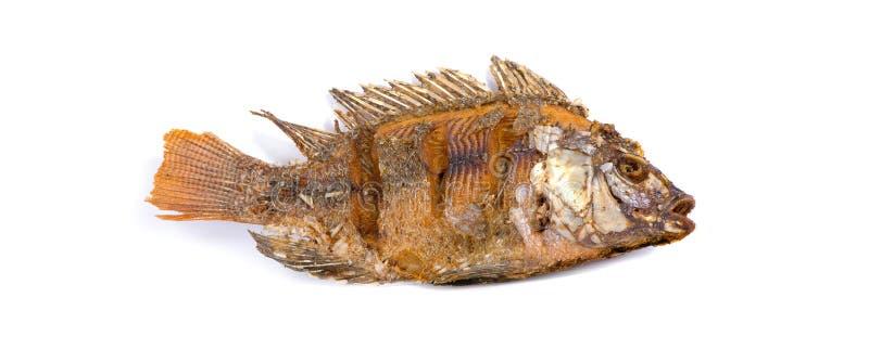 Os peixes de Fried Tilapia fritaram isolado no fundo branco imagens de stock