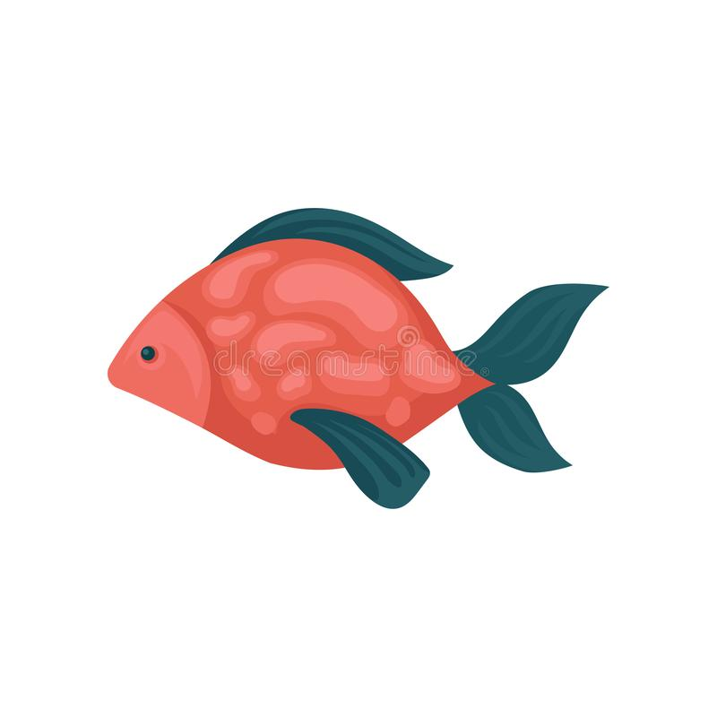 Os peixes do aquário com vermelho mancharam o corpo e aletas azuis Vida de mar tropical Animal marinho Vida do mar e do oceano Ve ilustração stock