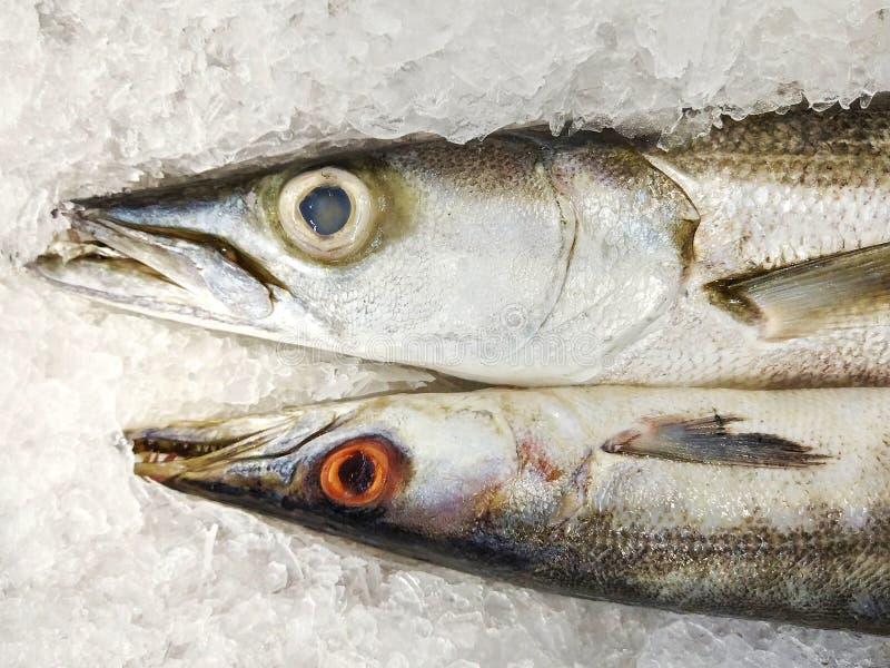Os peixes frescos do baracuda são colocados no gelo para a venda foto de stock