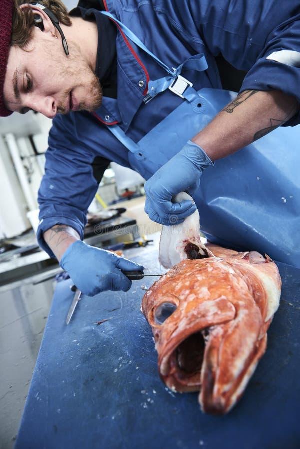 Os peixes frescos e os moluscos presentated pelo fishdealer imagem de stock