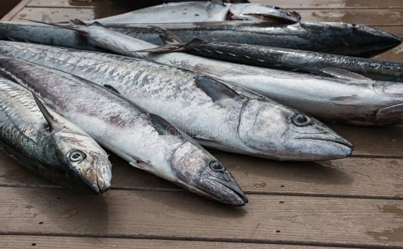 Os peixes frescos espalharam para fora na doca - Kingfish fotografia de stock royalty free