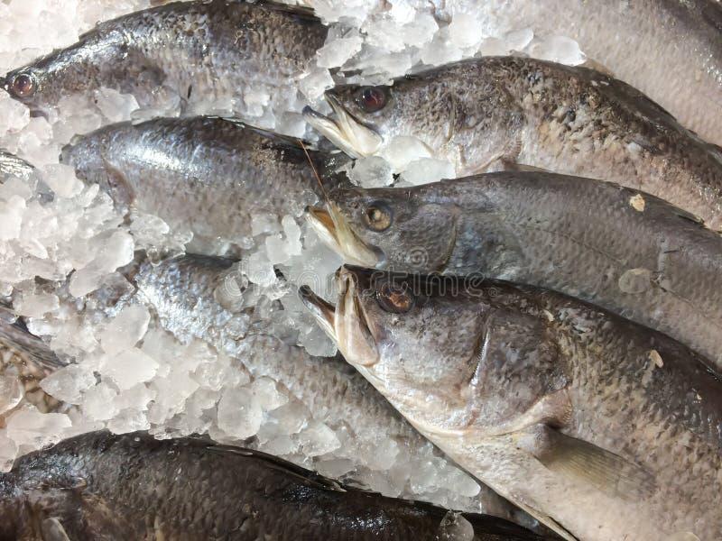 Os peixes frescos que refrigeram no gelo, peixes frescos venderam em um mercado foto de stock royalty free