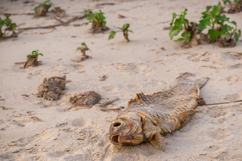 Os peixes inoperantes na imagem da praia? montaram com símbolo decorado do biohazard Conceito da poluição de água imagens de stock royalty free