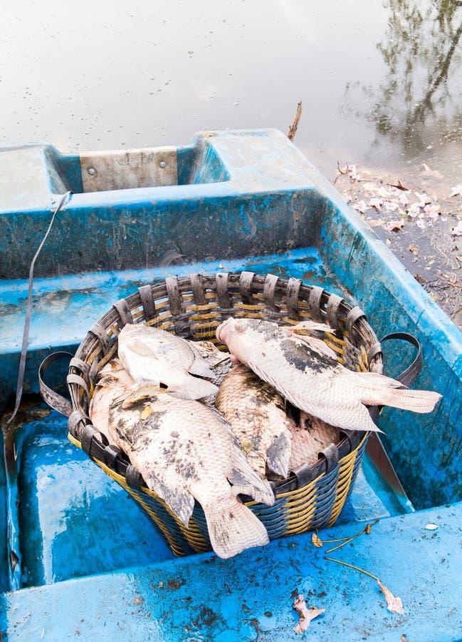 Os peixes morrem devido à água de esgoto foto de stock royalty free
