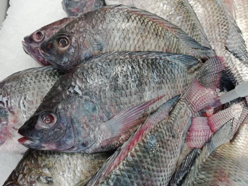 Os peixes pretos do tilapia do Nilo puseram sobre a venda no mercado fotos de stock royalty free