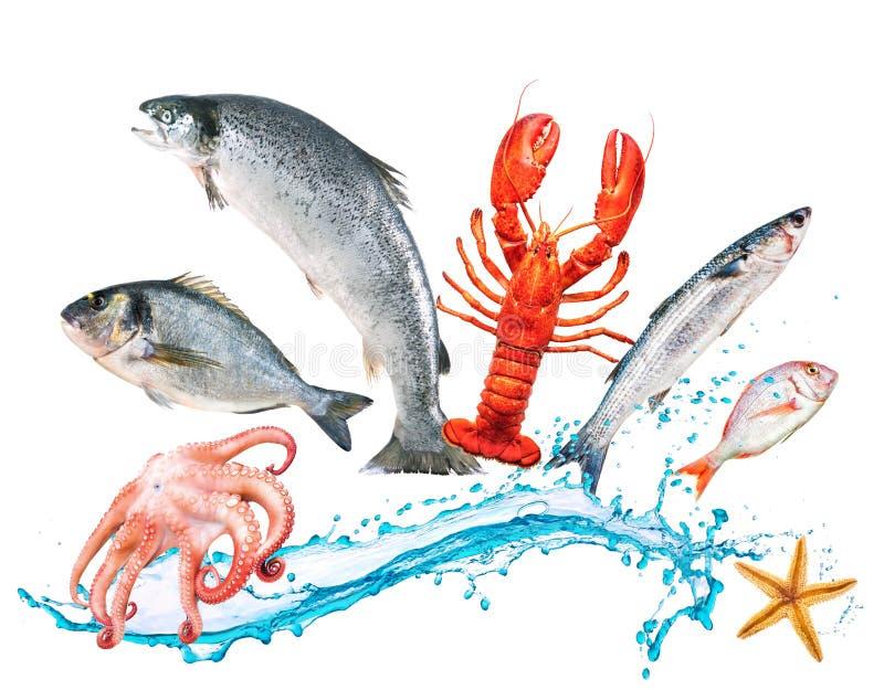 Os peixes saltam com watersplash imagens de stock royalty free