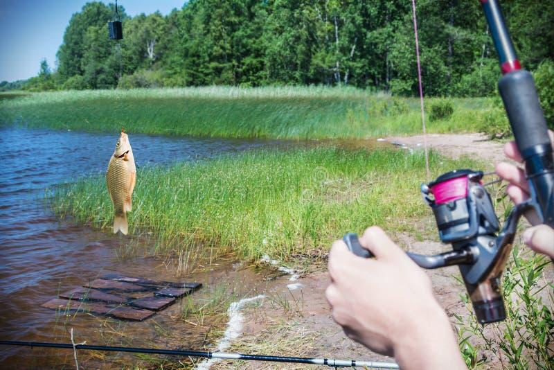 Os peixes travaram em um gancho no fundo do lago fotografia de stock royalty free