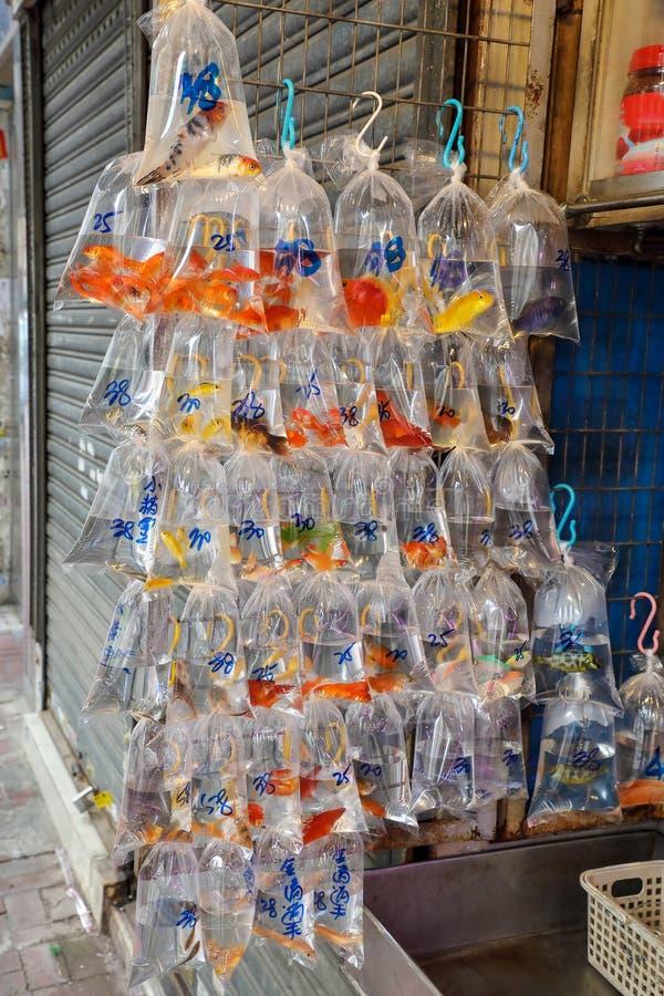 Os peixes tropicais do aquário e plat no mercado do peixe dourado de Hong Kong fotografia de stock