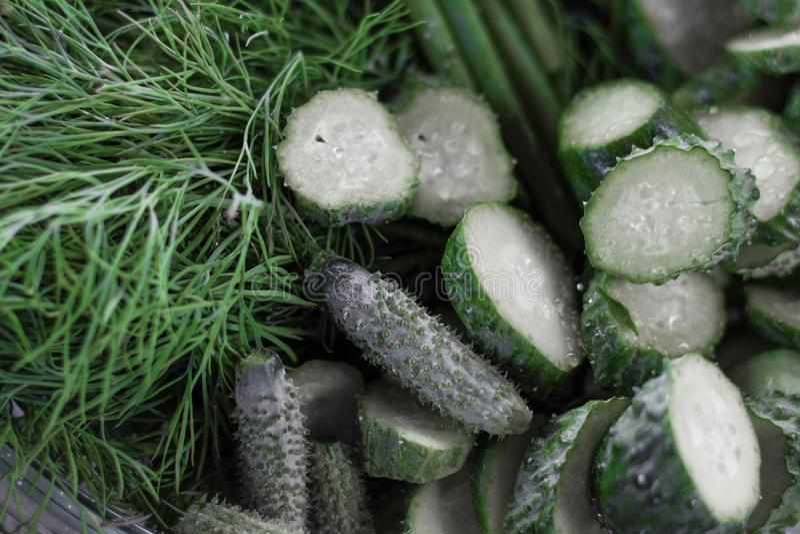 os pepinos frescos cortaram em partes em um fundo de verdes suculentos foto de stock