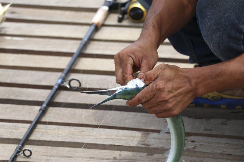 Os pescadores estão removendo o gancho dos peixes foto de stock royalty free