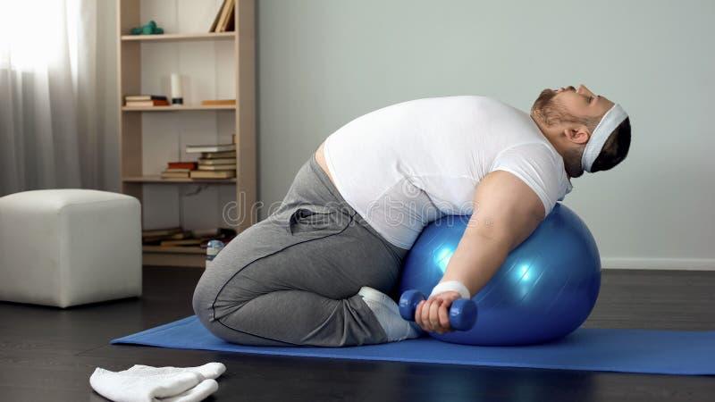 Os pesos de levantamento que encontram-se na bola da aptidão, músculos do homem excesso de peso decidido bombeiam foto de stock