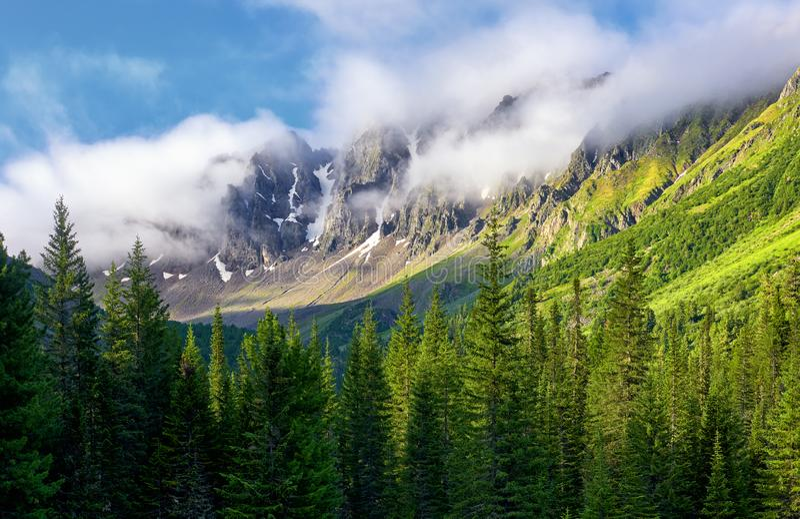 Os picos de montanha são encobertos na névoa grossa Manhã do verão nas montanhas Siberian fotografia de stock