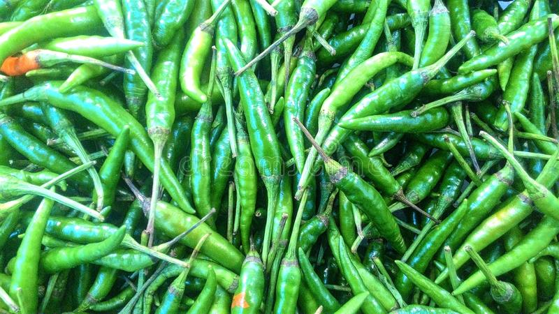 os pimentões verdes imagem de stock