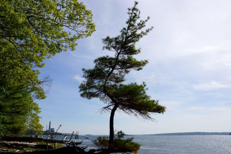 Os pinheiros crescem funky em uma praia na ilha dos primos imagem de stock