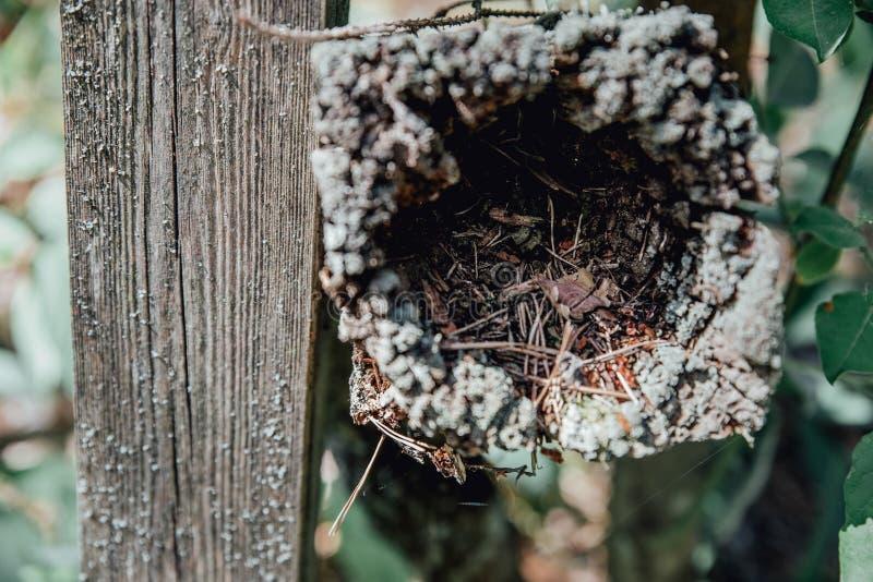 Os pinheiros da floresta registram os troncos abatidos pela ind?stria de registro da madeira fotografia de stock royalty free
