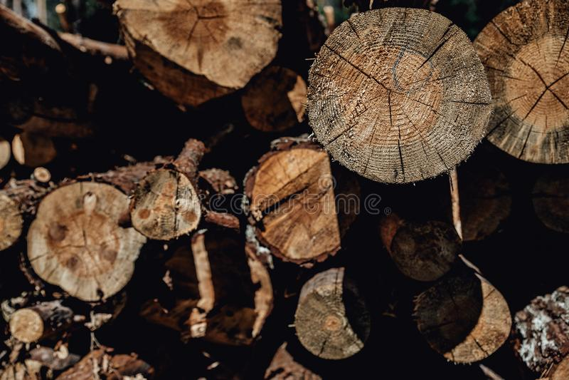 Os pinheiros da floresta registram os troncos abatidos pela ind?stria de registro da madeira foto de stock royalty free