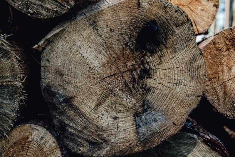 Os pinheiros da floresta registram os troncos abatidos pela ind?stria de registro da madeira fotografia de stock
