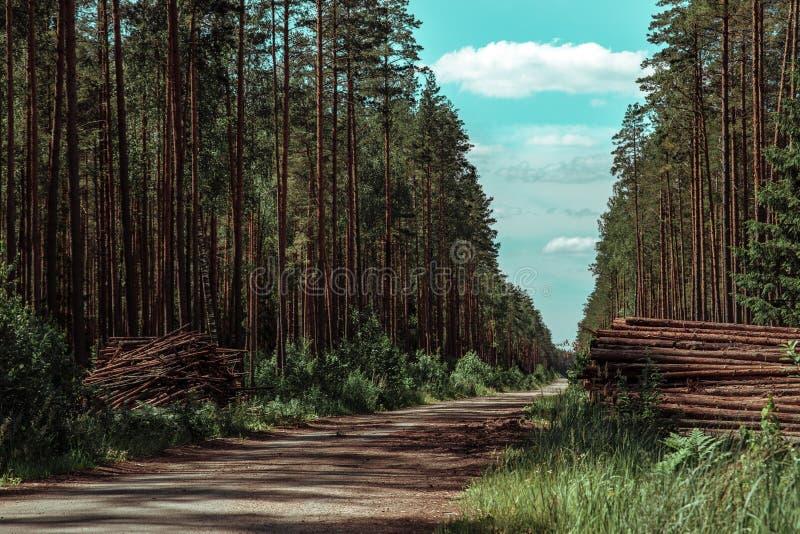 Os pinheiros da floresta registram os troncos abatidos pela ind?stria de registro da madeira imagem de stock