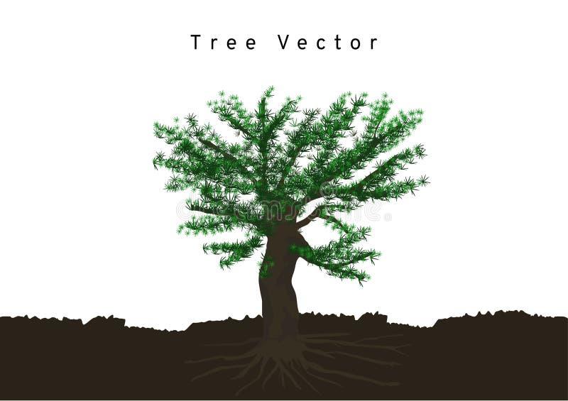 Os pinheiros grandes espalharam suas raizes, ramificaram no solo, vetor da árvore isolado no fundo branco ilustração do vetor
