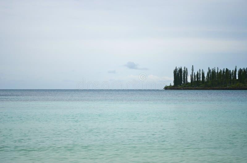 Os pinheiros nos water's afiam na ilha dos pinhos fotografia de stock