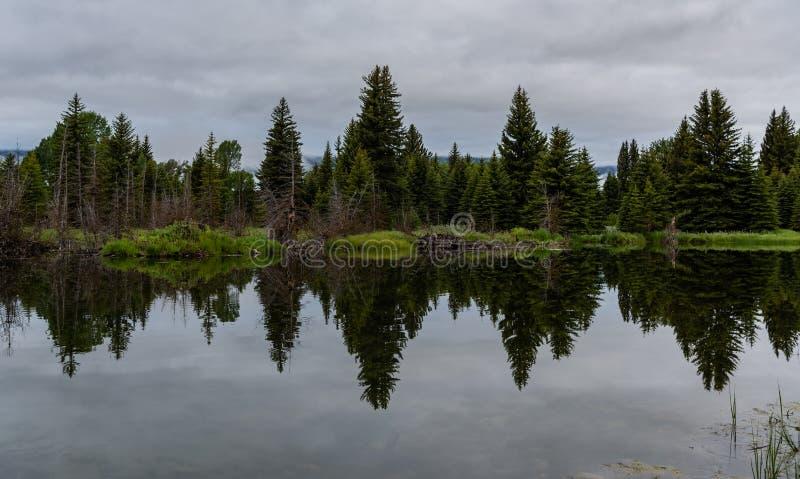 Os pinheiros refletem na água lisa imagens de stock