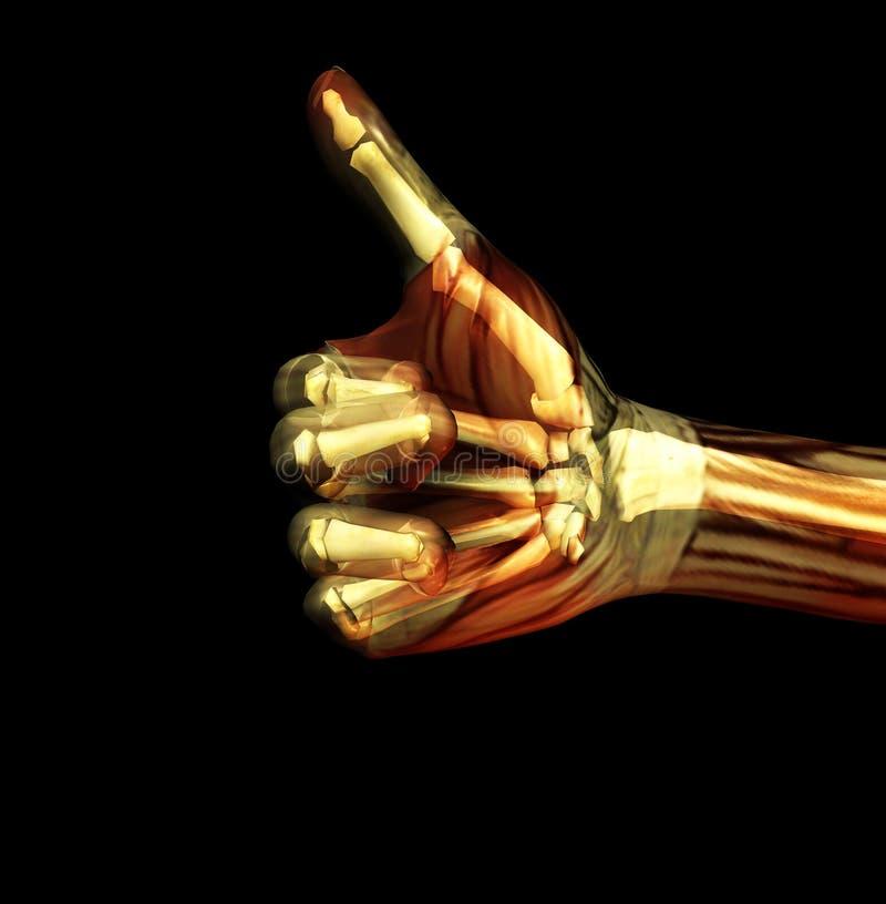 Os polegares levantam a raia de X 2