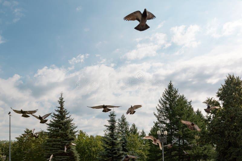 Os pombos sobem acima em um parque da cidade imagem de stock royalty free