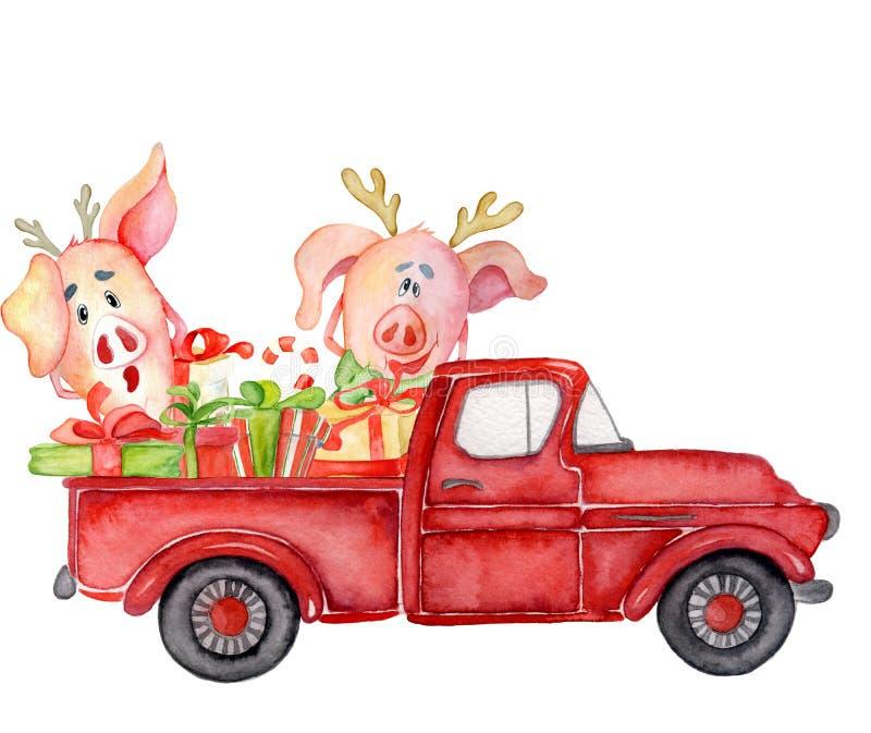 Os porcos bonitos com abóboras colhem a aquarela 2019 tirada mão do molde da ação de graças ilustração do vetor