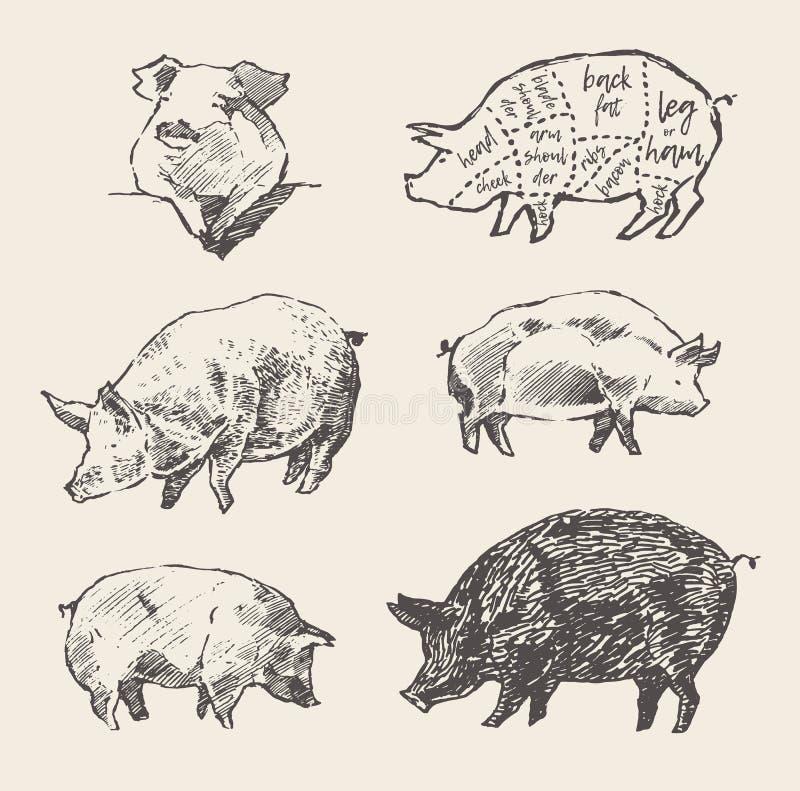 Os porcos tirados do vetor planejam o menu do restaurante dos cortes de carne de porco ilustração do vetor