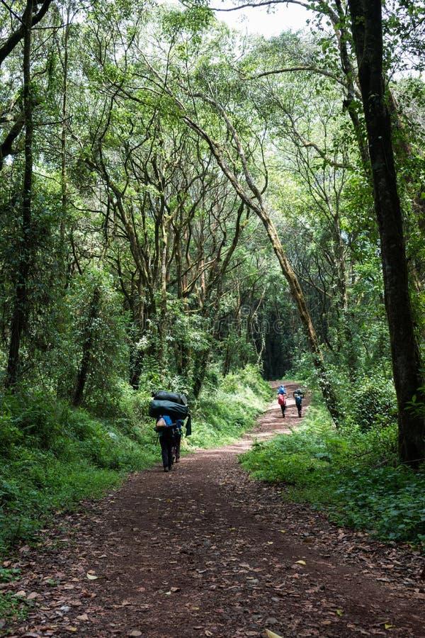 Os porteiros masculinos Unrecognisable levam cargas até de 30kg em suas partes traseiras e cabeças na rota de Machame de Kilimanj foto de stock