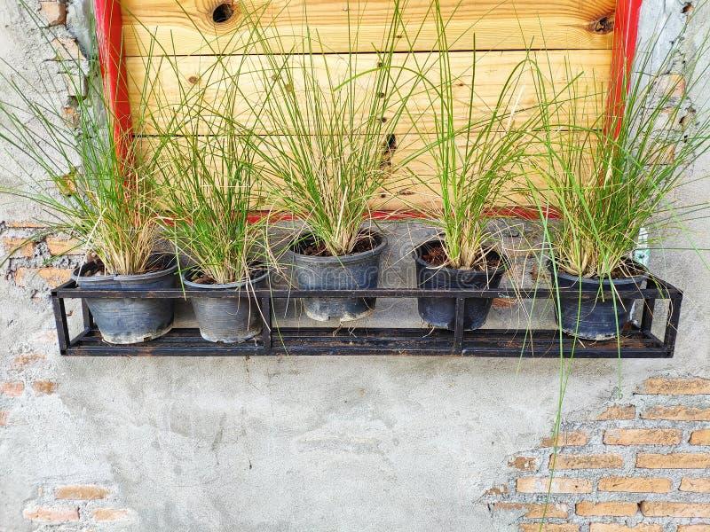Os potenciômetros da planta são colocados em seguido perto da janela, com a parede do tijolo e do cimento fotos de stock royalty free
