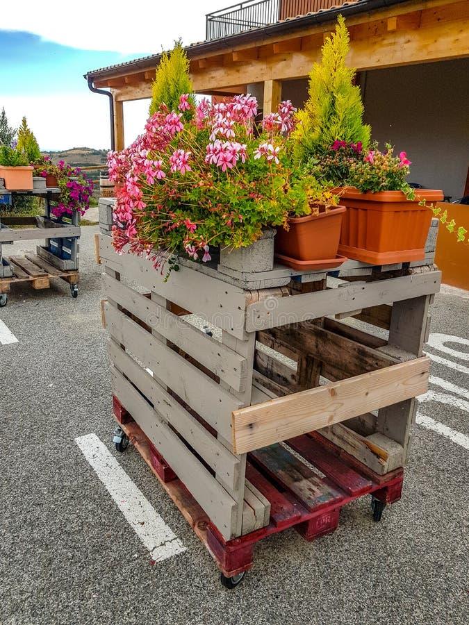 Os potenciômetros de flor estão nas páletes de madeira pintadas fotografia de stock royalty free