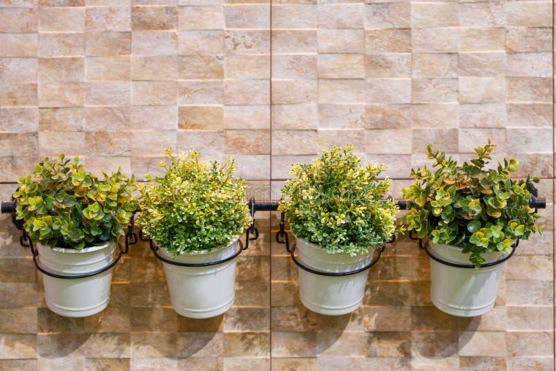 Os potenciômetros pequenos da árvore penduram sobre o fundo cinzento verde da parede do cimento, foto de stock