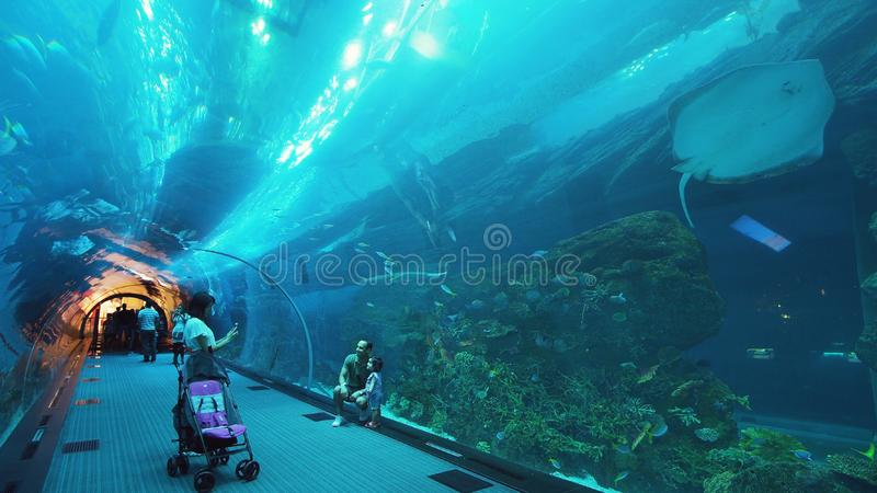 Os povos admiram a vida marinha no túnel de vidro do aquário na alameda de Dubai fotografia de stock