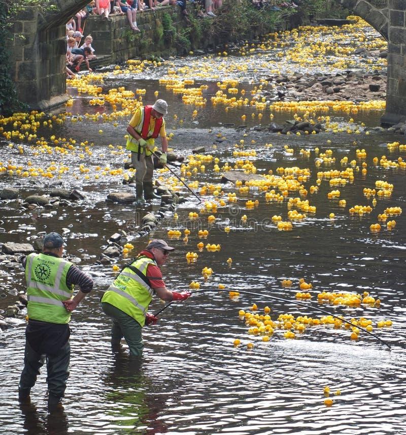 Os povos e os voluntários na raça anual do pato da caridade de easter segunda-feira hebden dentro a ponte fotos de stock
