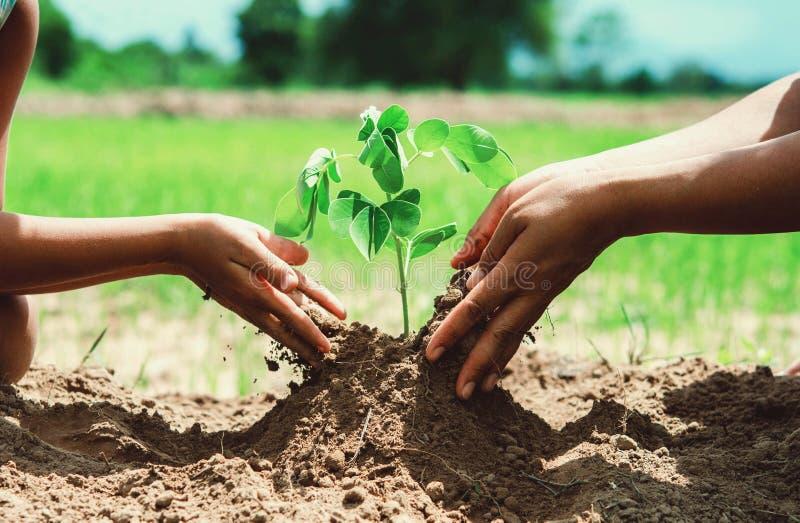 os povos entregam a planta de ajuda a árvore que trabalha junto na exploração agrícola concentrada foto de stock