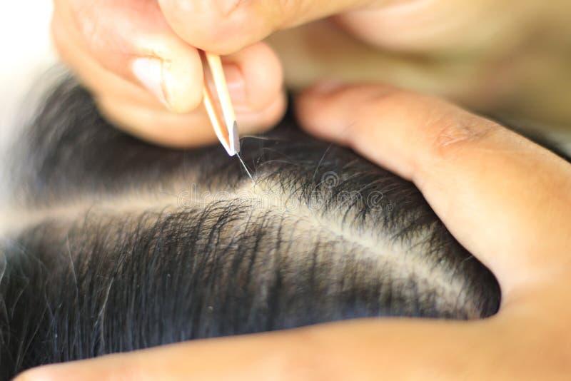 Os povos estão usando a pinça para puxar a remoção do cabelo branco imagem de stock royalty free