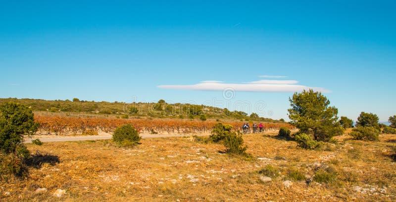 Os povos fazem uma caminhada ativa em bicicletas através dos campos da uva fotografia de stock royalty free
