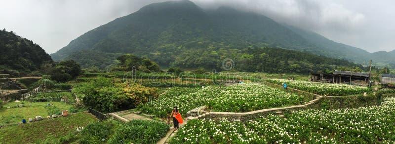 Os povos no lírio de calla colocam em Yang Ming Shan Park, Taiwan imagens de stock royalty free