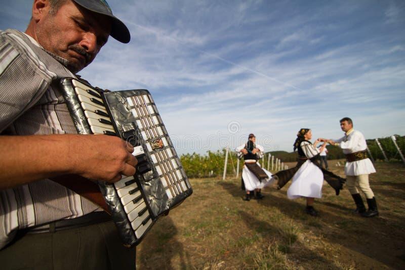 Os povos que dançam no vinhedo tradicional de Jidvei colhem favoravelmente imagem de stock