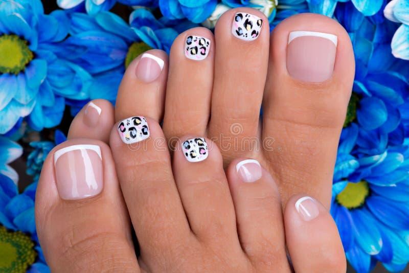 Os pregos da mulher bonita dos pés com tratamento de mãos francês bonito fotos de stock