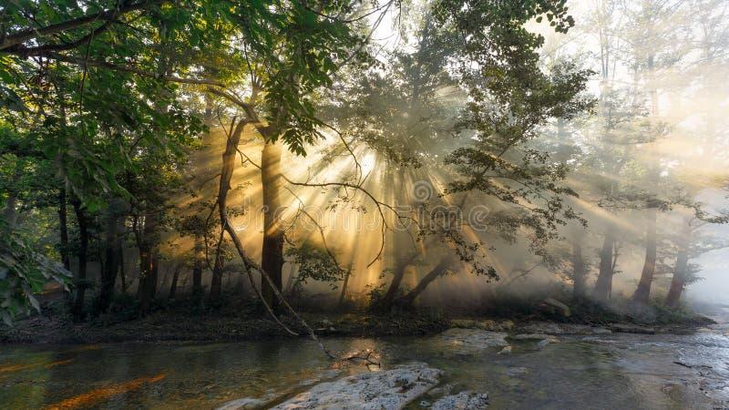 Os raios de Sun fazem sua maneira através da névoa e das folhas das árvores no nascer do sol foto de stock royalty free